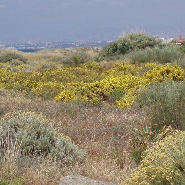 El Ayuntamiento promueve un encuentro urgente con la Demarcación de Costas para la protección de las Dunas de Artola