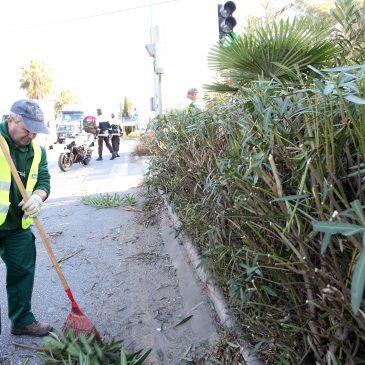 La Patrulla Verde de Marbella realiza cerca de 1.000 informes preventivos en el periodo 2015
