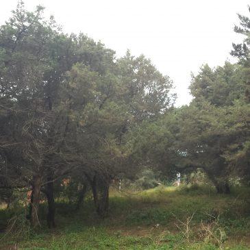 Los vecinos de Pueblo Andaluz trasladan propuestas como la protección medioambiental de las más de cien sabinas dentro de LasChapasaPiedeCalle