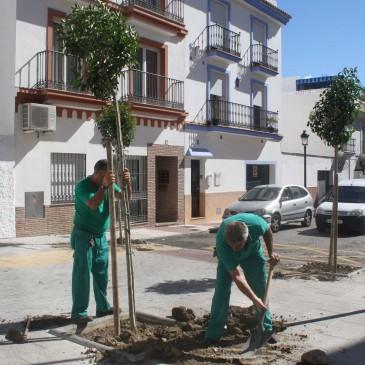 La Tenencia de San Pedro Alcántara llevará a cabo un plan para recuperar la arboleda perdida en los últimos años