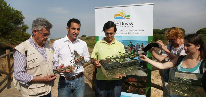 El Ayuntamiento colabora en la suelta de camaleones en las Dunas de Artola para contribuir a proteger la especie y regenerar el paraje natural