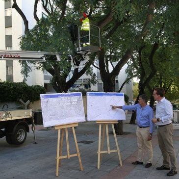 El Ayuntamiento pone en marcha un Plan de Poda, que actuará sobre 3.000 árboles y palmeras