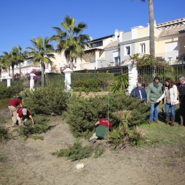 El Ayuntamiento trasplanta a Real de Zaragoza 48 ejemplares vegetales afectados por el trazado de la Senda Litoral en la Duna La Adelfa