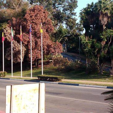 La Plataforma Marbella x sus Árboles pide la dimisión del Concejal de Obras, Urbanizaciones y Parques y Jardines