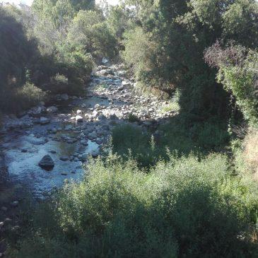 OSP solicita el respaldo del Pleno para realizar un estudio sobre la biodiversidad del Río Guadaiza que permita limpiar el cauce sin perjuicio medioambiental El Río Guadaiza
