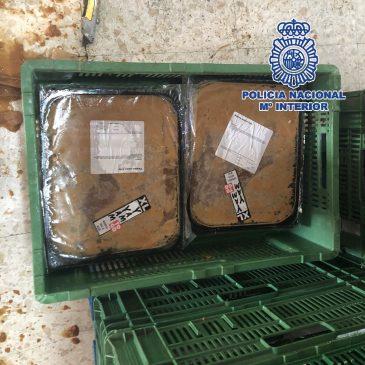 En una nave de Alhaurín de la Torre (Málaga)  La Policía Nacional incauta más de media tonelada de cocaína escondida dentro de bloques de comida congelada