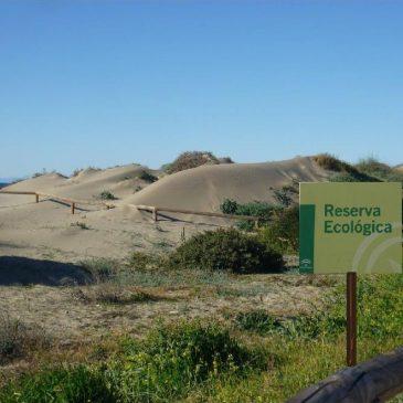 TRES AÑOS DE RESERVA ECOLÓGICA-DUNAS DE MARBELLA    La Asociación ProDunas festeja estos días el tercer aniversario de la Declaración de Reserva Ecológica para los 9 entornos dunares que existen al Este de Marbella.