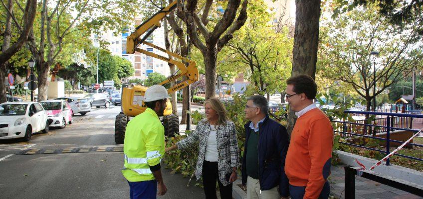 El Ayuntamiento actuará sobre 65.000 ejemplares de árboles y palmeras dentro del Plan de Poda, que se desarrollará durante cuatro años