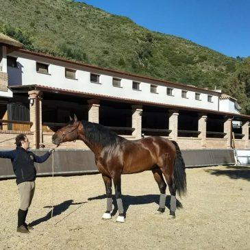 El mundo del caballo cuenta con un nuevo Centro Hípico en Marbella  El centro, que se inaugurará el 16 de febrero, supondrá un importante atractivo turístico