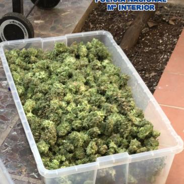Desmantelados dos plantaciones clandestinas de marihuana en Málaga La Policía Nacional detiene a un hombre por plantar marihuana en dos trasteros de su vivienda en la barriada de Puerto de la Torre
