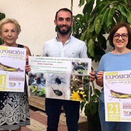 El Ayuntamiento colabora con la Asociación de Vecinos Las Albarizas en la exposición 'Los pequeños insectos, esos desconocidos' que se celebra mañana